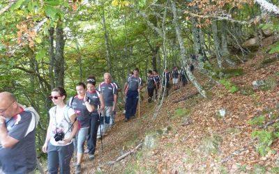 Ruta del 'haya loca' y ruta del hayedo de Las Ilces