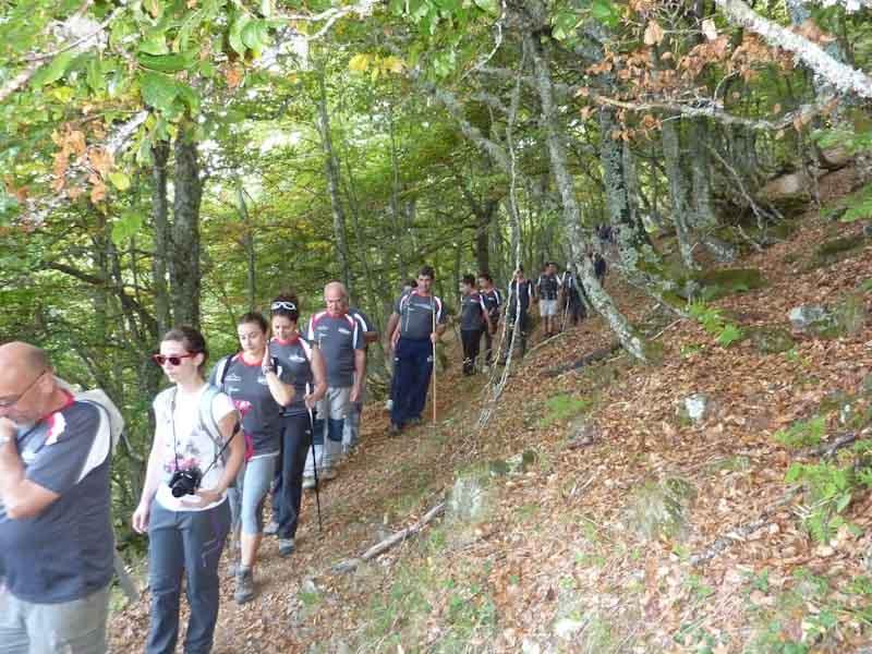 Hayas en Picos de Europa Liebana