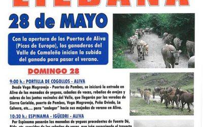 Subida del ganado a los puertos de Áliva 2017