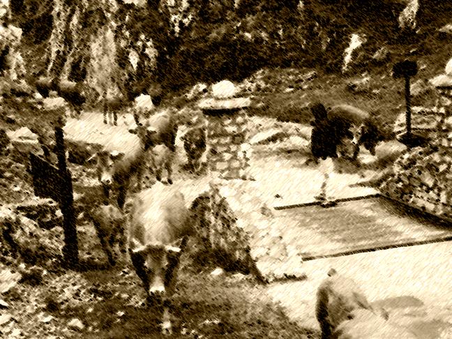 subida del ganado a los puetos de aliva - entrada por las portillas del boqueron