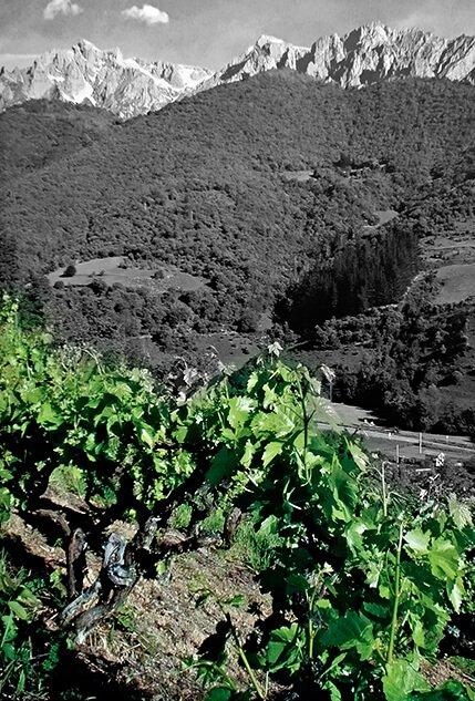 que hacer en cantabria visitar sus vinos