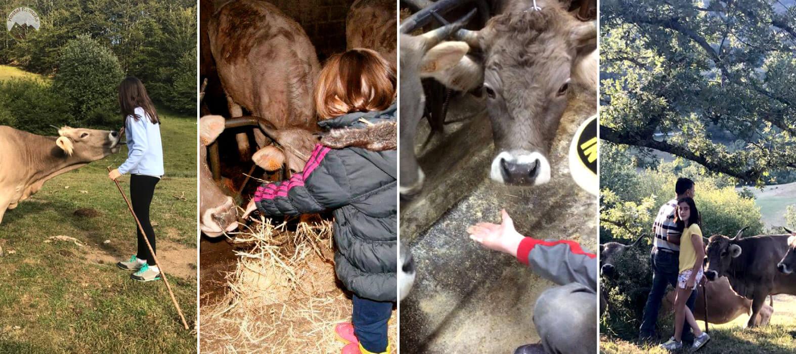 Visita Ganadería de Vacas